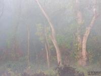 Októberi fák