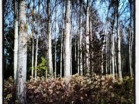 Erdőszéle (2012. október 31.)