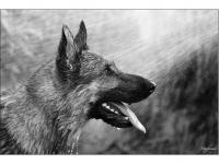 Hüsi – avagy kutya meleg volt ma (Gomba, 2014. június 8.) (Canon EOS 5D MII. ISO 1600, f4)