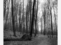 Erdei út  - Lomográf tájkép - Ljubitel 166B-vel, filmre készült hagyományos tájkép