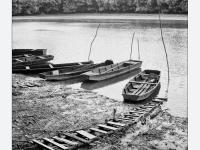 Ladikok (Baja, 2013. augusztus) (Yashica Mat 124G, Kodak TRI-X 400)
