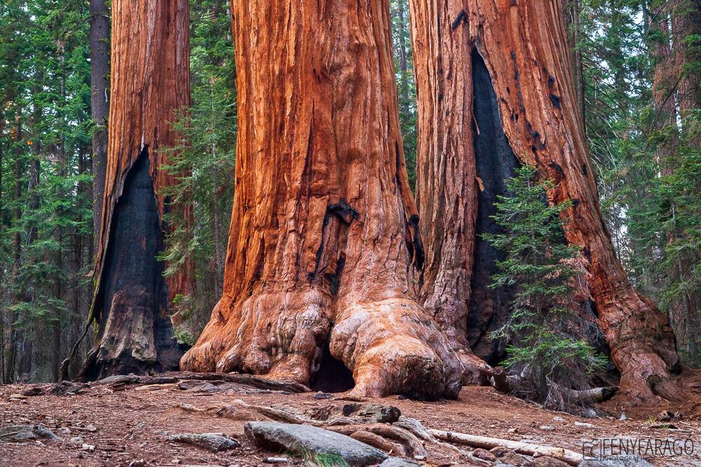 Óriások - Sequoia Nemzeti Park (USA)