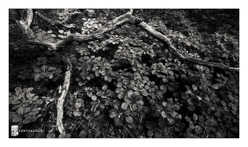 Élet és halál (Vértes, Haraszt, 2014. szeptember 28.) | Life and death (Vértes mountain, Haraszt, Sept 28th. 2014.)