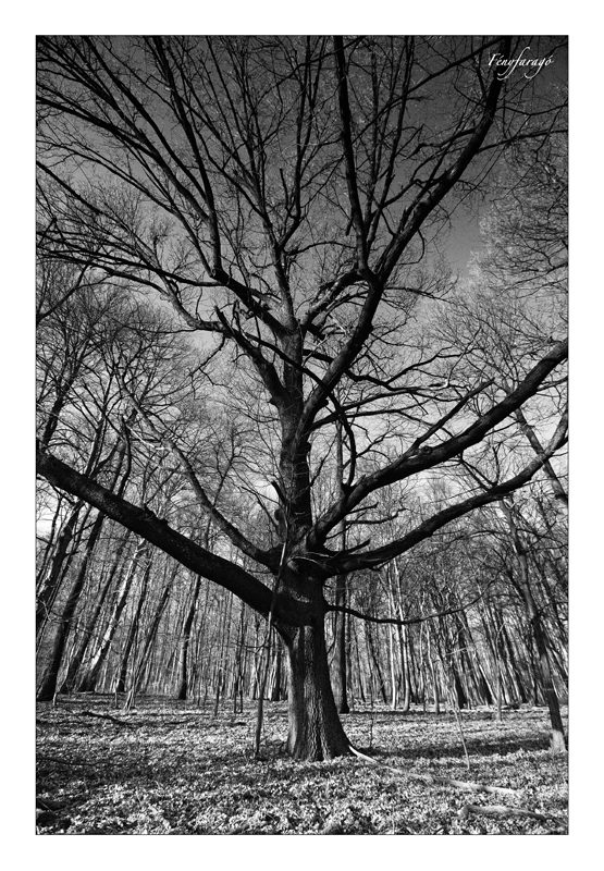 Az erdő pásztora (Várgesztes, 2014. március 9.)