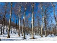 Télvége fényei (Vértes, 2015. február 20.) | Lights of the winter-end (Vértes mnt, 20th, Feb, 2015.)