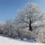 A Tél pompája