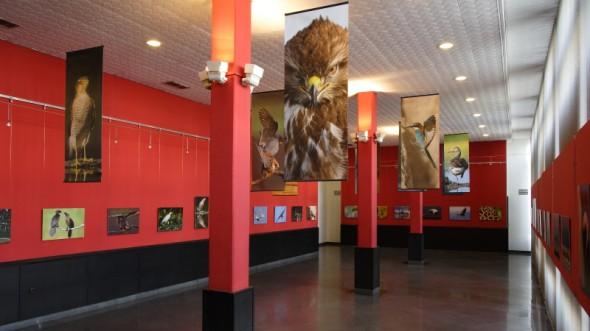 Gondosan előkészített és kivtelezett kiállítás (Foto-Graf Fotográfiai és Grafikai Stúdió - Vajda János)