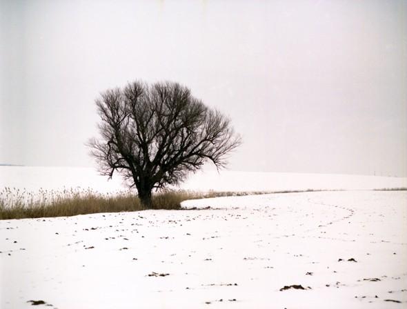 Magányos fa (Mamiya RB67)