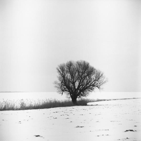 Magányos fa (Ljubitel 166B, Kodak TRI-X ff film)