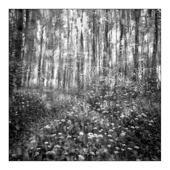Álom-erdő