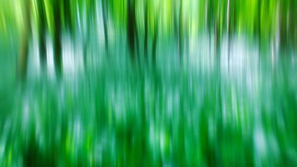 Vibráló erdő
