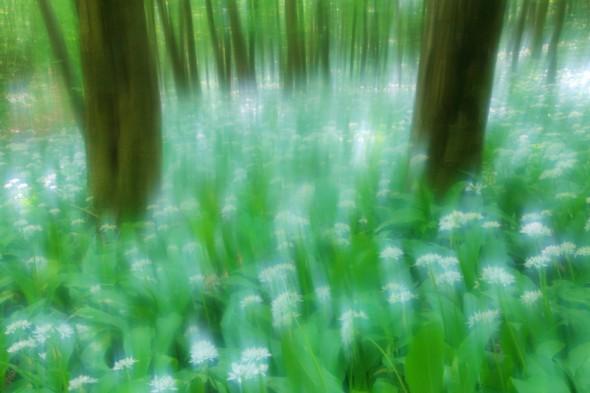 Tavaszi virágszőnyeg