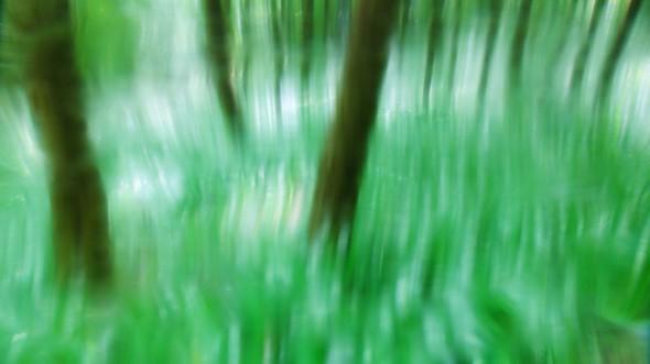 Virágzó tavaszi erdő