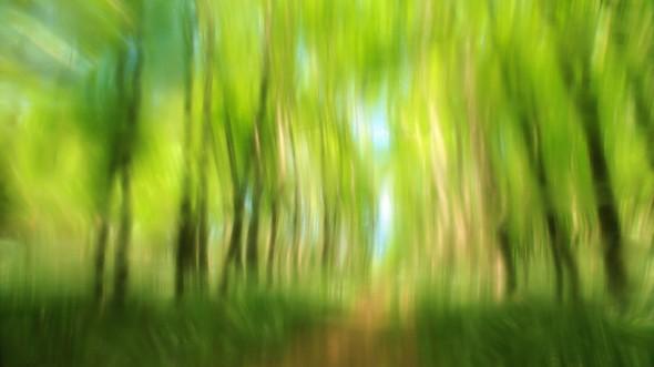 Tavasz-erdő
