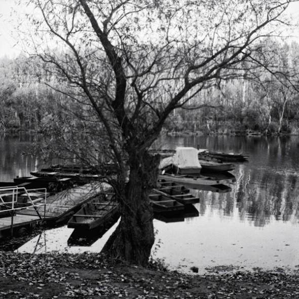 Parti fűz (Mártély, 2013. november 1.)  (Yashica Mat 124G, Kodak TRI-X)