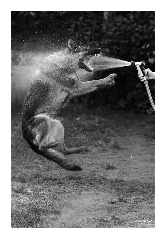 Karate kutya (Gomba, 2014. június 8.) (Canon 5D MII. ISO 1600, f4)