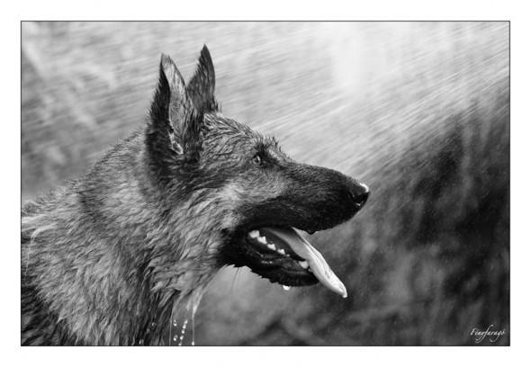 Hüsi - avagy kutya meleg volt ma (Gomba, 2014. június 8.) (Canon 5D MII. ISO 1600, f4)