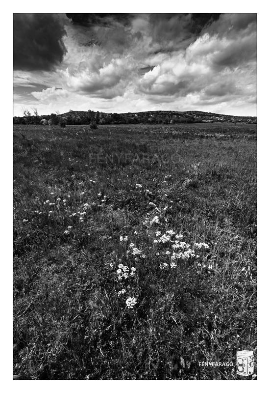 Tavaszi rét (Csákberény, 2015. május 3.) | Springlike meadow (3th May, 2015.)