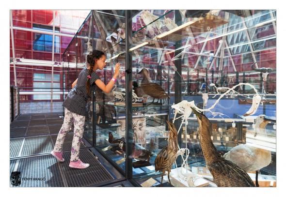 Múzeumok Éjszakája - Az ELTE-n (Buapest, 2015. június 20.) ELTE Természetrajzi Múzeum, Biológiai és Paleontológia Gyűjtemény.