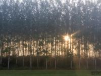 Őszi napkelte