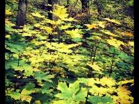 Erdő alján (2012. október 30.)