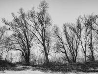 Csupasz fák (Duna. 2020. január 26.)