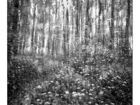 Álom-erdő - Lomográf tájkép - Ljubitel 166B-vel, hagyományos, filmre készített tájkép.