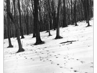 Léptek nyoma- Lomográf tájkép - Ljubitel 166B-vel, filmre készült hagyományos tájkép