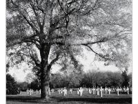 Életfa (Mindszent, 2013. október 29.) (Yashica Mat 124G, Kodak TRI-X)