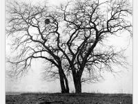 Ágas-bogas - Lomográf tájkép - Ljubitel 166B-vel, filmre készült hagyományos tájkép