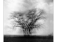 Ágtánc - Lomográf tájkép - Ljubitel 166B-vel, hagyományos, filmre készített tájkép.