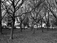 Lakótelep-szövevény (2013. november 10. - Tatabánya, Sárberki lakótelep)