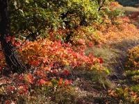 Izzó ösvény (Vértes, 2011. október 15.)