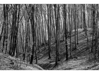 Erdő-rajz (Várgesztes, 2014. március 9.)